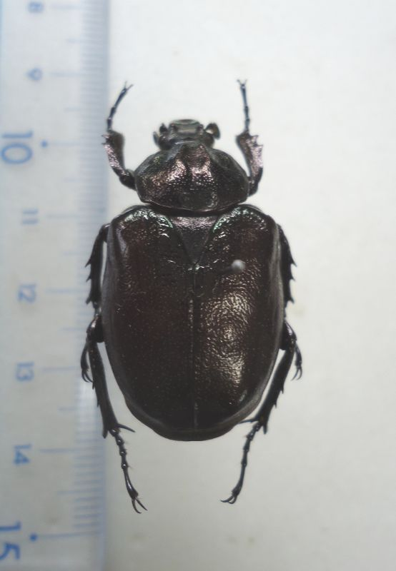 http://www.mokuzaihozon.org/column/images/DSC00559.jpg